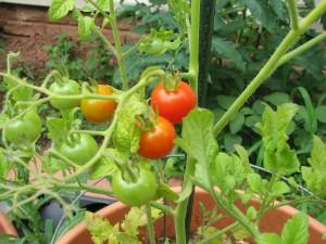 2009-07-17-garden_0010