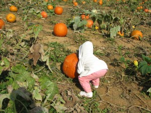 2008 10 17_Great Country Farms peanuts and pumpkins_0025