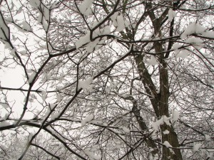 2008-01-17 first snow039