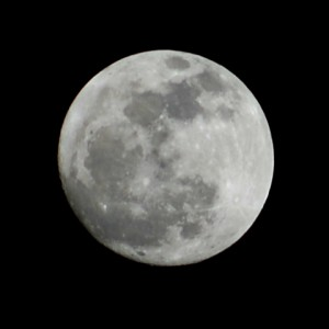 This is the gorgeous moon that rose over the Metro DC area on the evening of Susan's passing, as captured by our mutual friend Robin (@noteverstill).  Her blog is The Not-Ever-Still Life: http://noteverstill.blogspot.com/